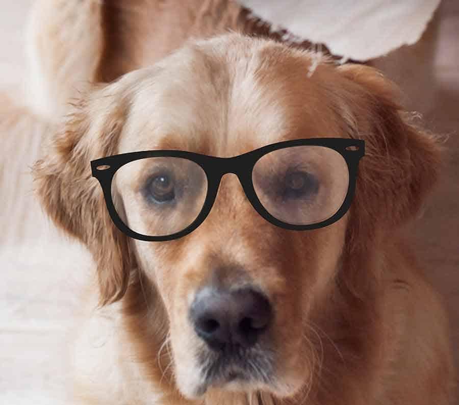 Dozer with eye glasses