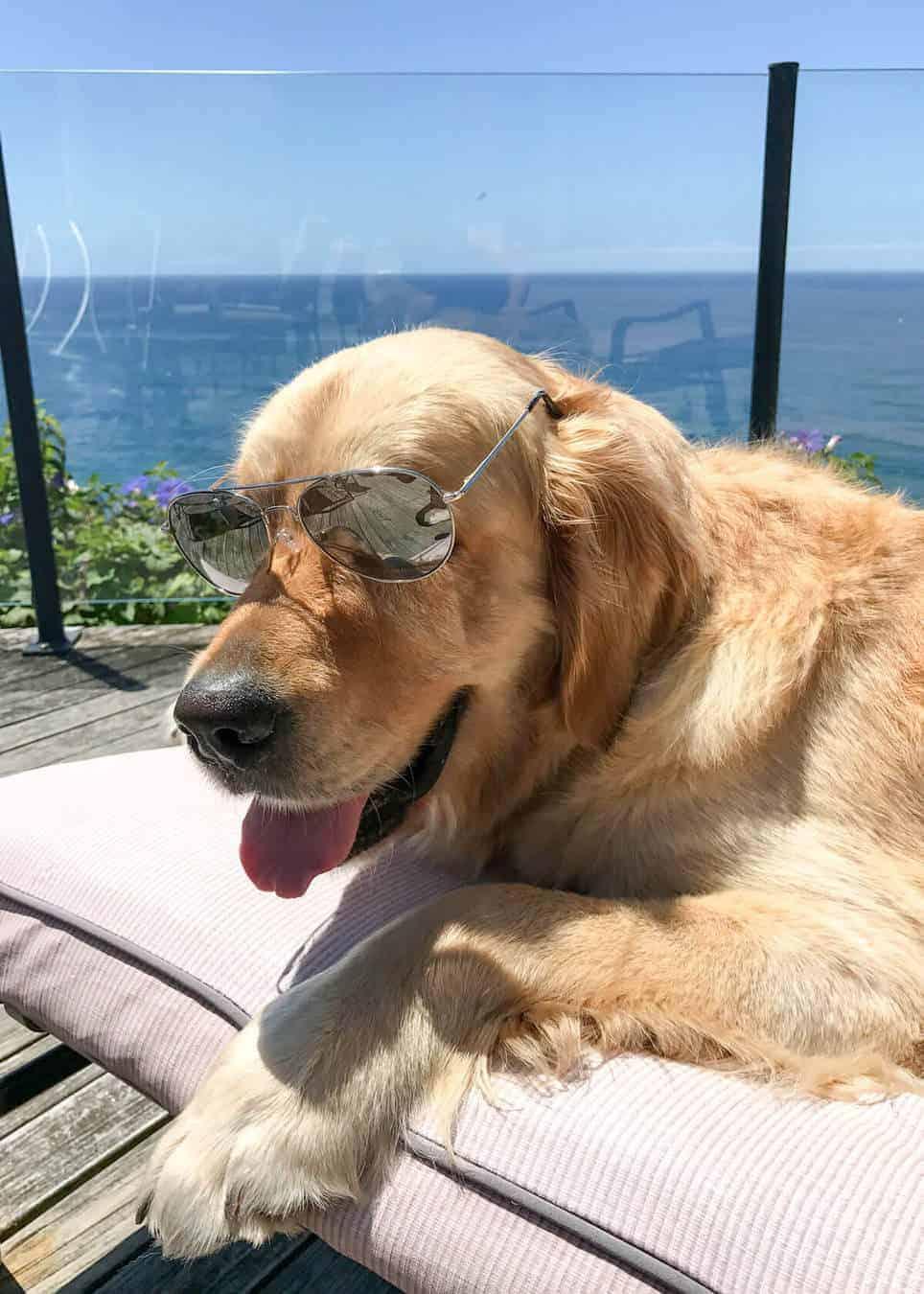 dozer-sunglasses