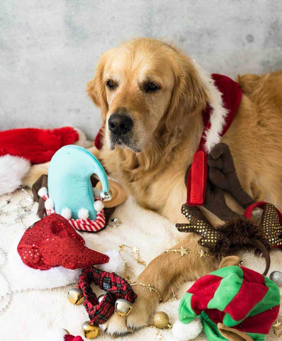 Dozer Christmas accessories