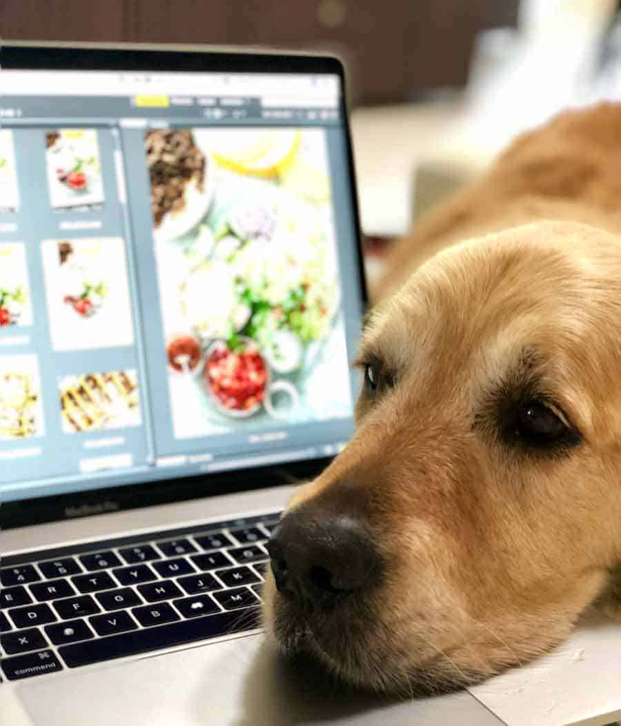Dozer the golden retriever head on laptop