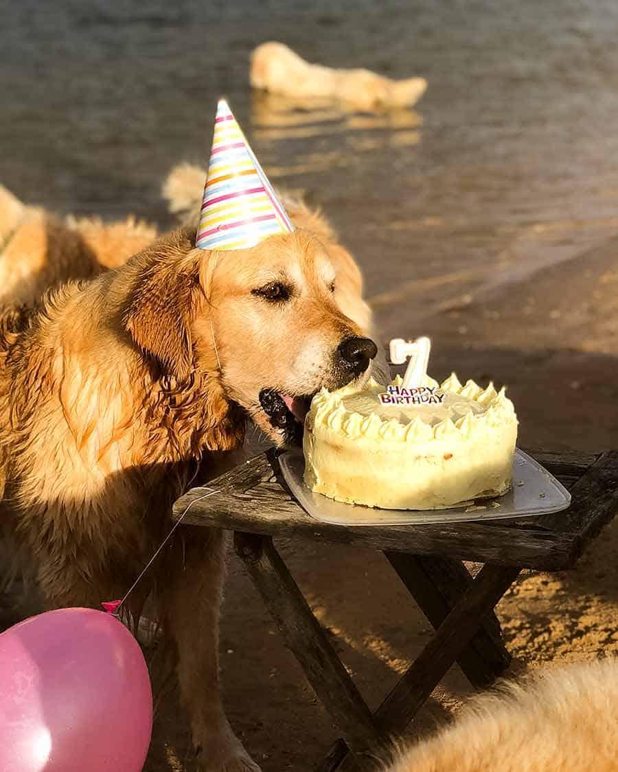 Dozer birthday party - dog cake - Bayview