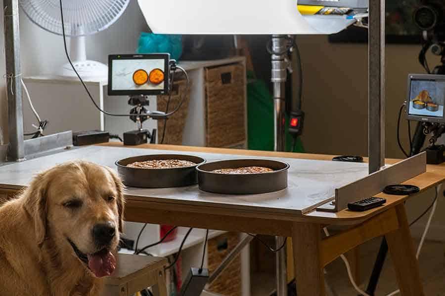 Dozer shooting dog cake recipe video