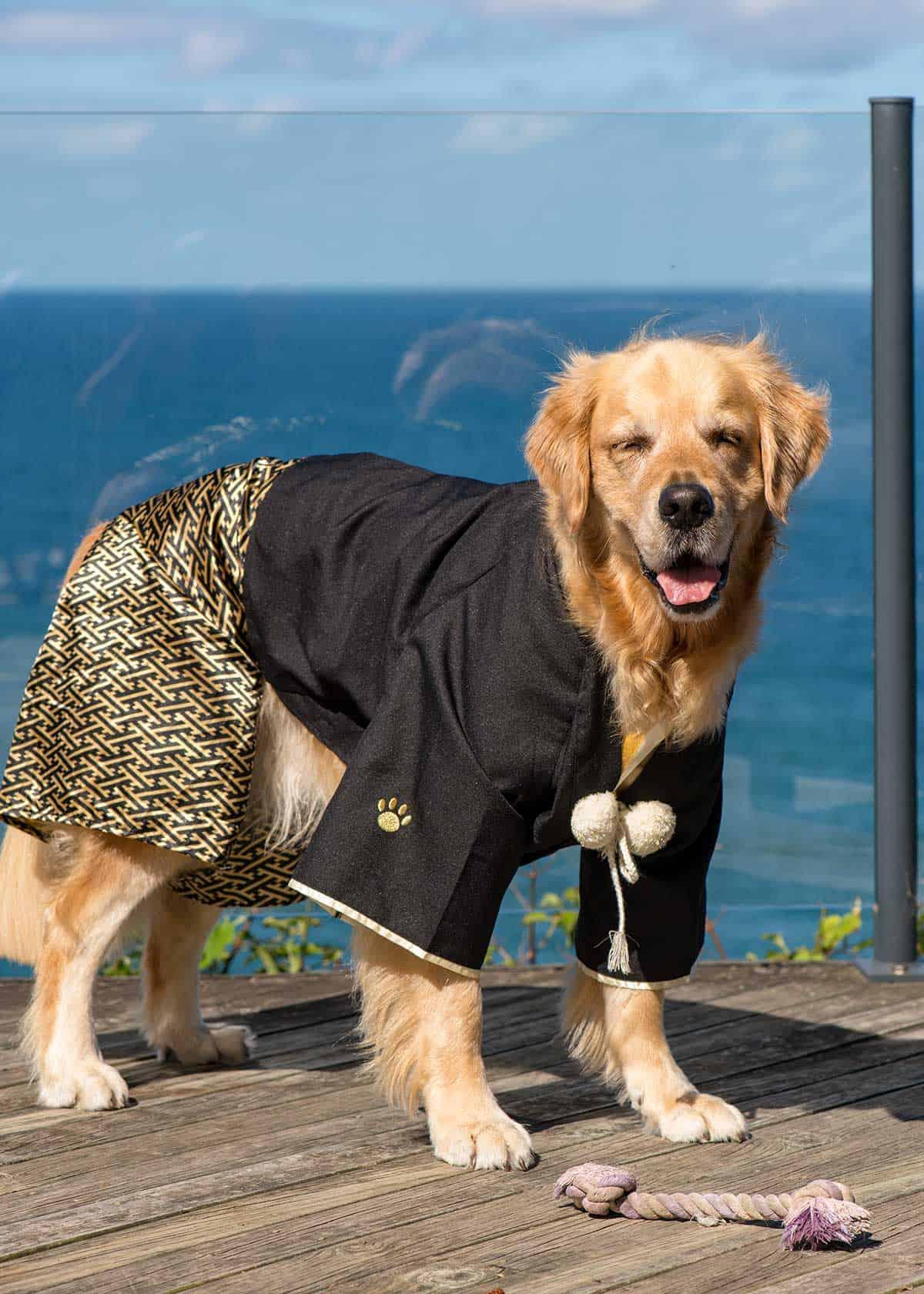 Dozer kimono from Japan Tokyo Harajuku - cute dog outfit